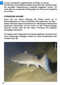 Fluss-Strategie Meerforellen